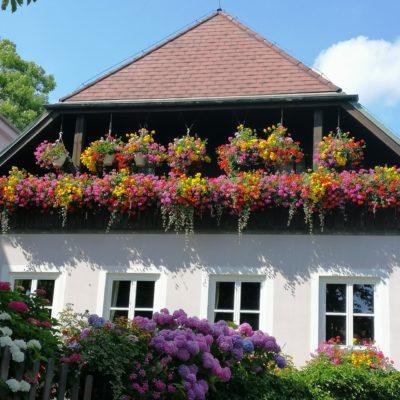 Blumen am Pöllauberg
